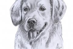 Hund_1-18